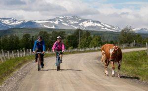 csm_2NOOSL002B-bike-individuell-norwegen-mjolkevegen-vaset-mountains_of_norway_c6860cff9c