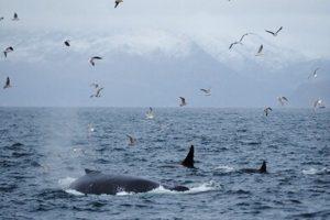 NOTOS005-wanderkreuzfahrt-norwegen-nordspitzbergen-walke-christian-engelke@2x.pjpeg